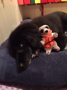 Asyl bei Hund Mister